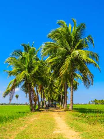 夏日蓝天下的椰树图片