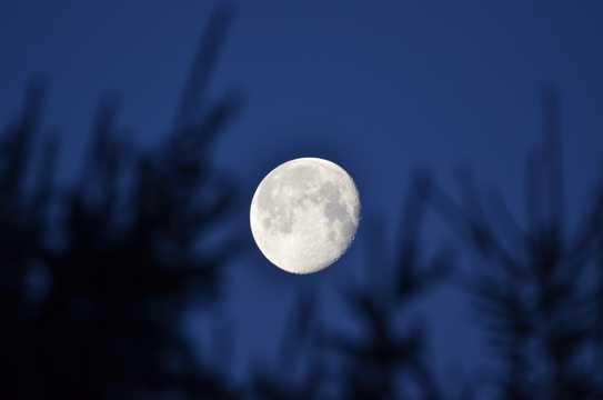 月亮挂在树梢上图片