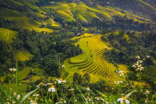 亚洲水稻梯田景观图片
