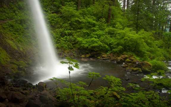 森林中的原生态瀑布流图片