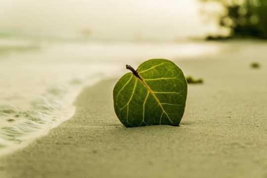 海滩上的树叶