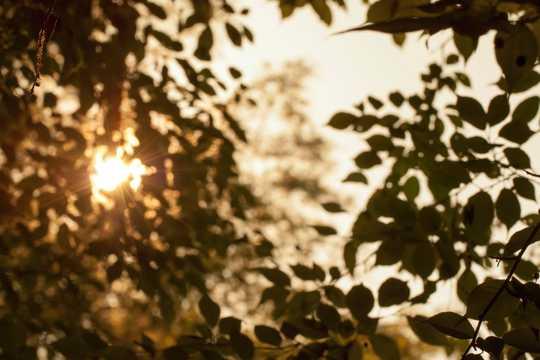 柔美的阳光透过树叶图片