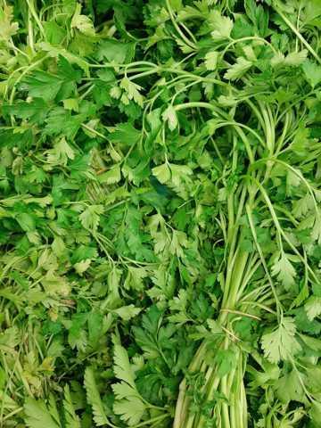 新鲜绿色芹菜图片