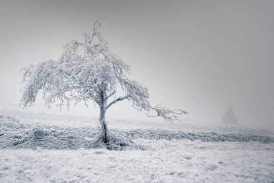 美丽的晶状雾凇图片
