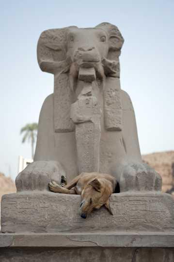 埃及阿斯旺石狮雕塑