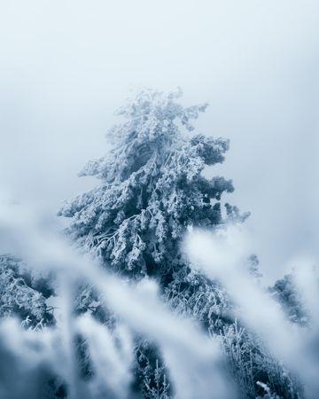 冬日唯美树木雾凇图片
