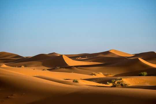 金色的迷人沙丘