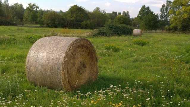 草坪上的稻草包